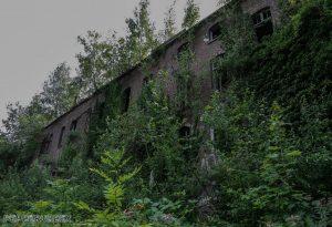 Chartreusse 31